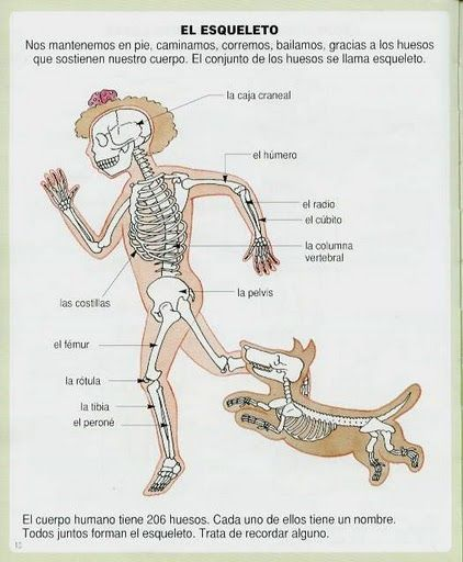 partes cuerpo humano