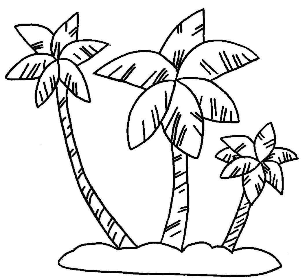 Belen palmeras