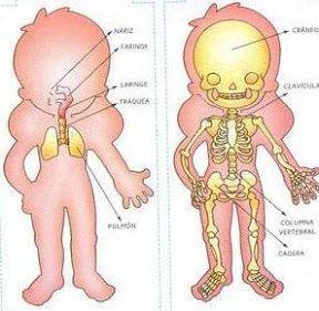 fichas_cuerpo_humano